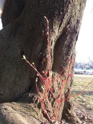 赤い樹1.jpg