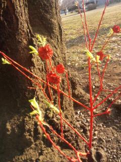 赤い樹2.jpg